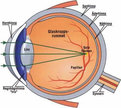 vad beror ryckningar i ögat på